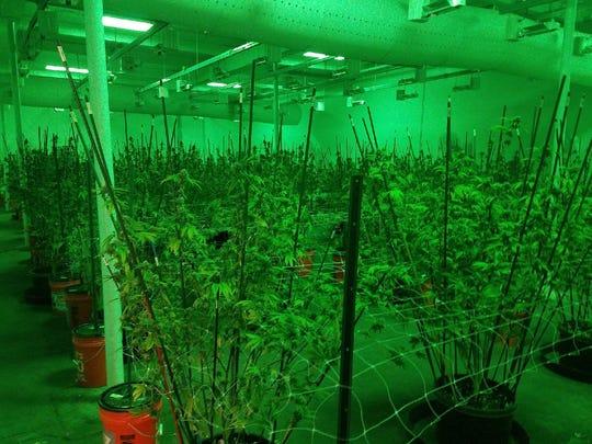Detroit police bust million-dollar marijuana operation.
