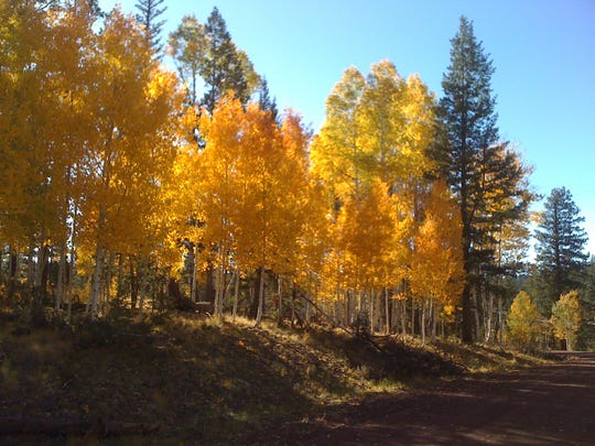 Fall colors near Big Lake on Fort Apache Reservation.