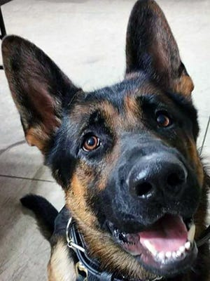Jethro, a 3-year-old German shepherd police dog, died Jan. 10, 2016, a day after a burglary suspect that he discovered shot him three times.