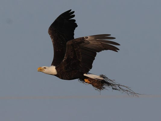 636416912110501027-eagles024.JPG