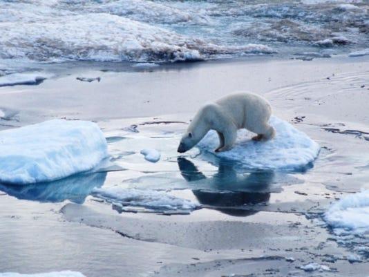 climate change - polar bear.jpg