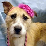 Pet of the Week: Chevy