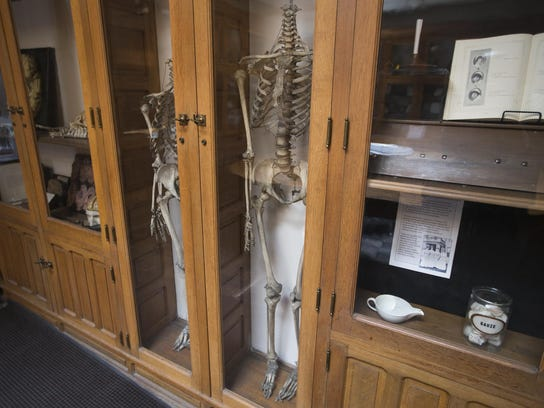Display cases featuring skeletons for anatomical examination