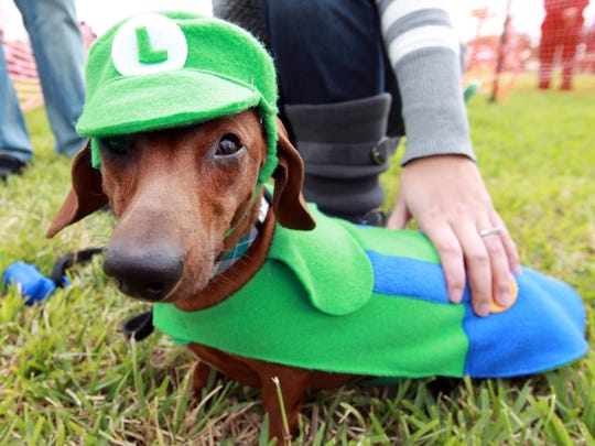 Linkyn shows off his custom Luigi costume with owner Britney Barter Saturday, Oct. 27, 2012 during the Dachshund race at the Gulf Coast Humane Society's 2nd Annual Pawfest.