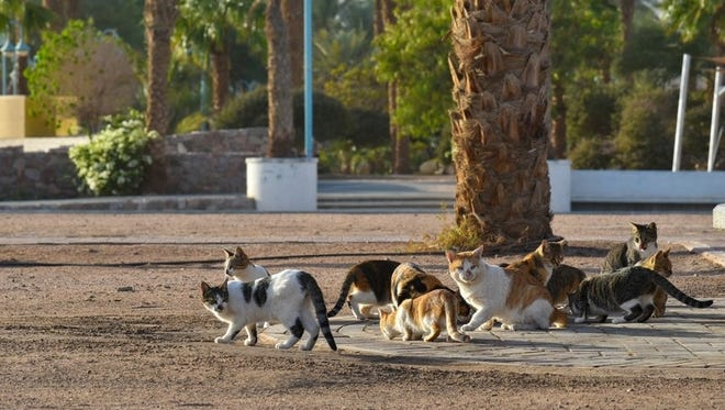 Free-roaming cats congregate in colonies near a food source.