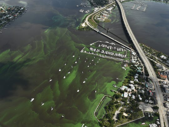 Drifts of algae blooms are seen June 24, 2016, filling
