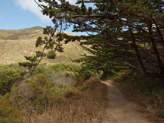 Soberanes Canyon Trail in Garrapata State Park in Big Sur.