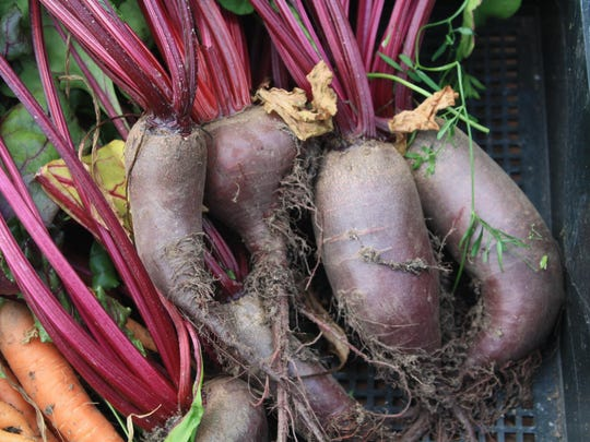If root crops such as carrots or beets are having problems, symphylans could be to blame. These white, centipedelike, soil-dwelling arthropods, about 1/4 inch long, have six to 12 pairs of legs.