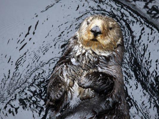 -sea otter23.jpg_20090928.jpg