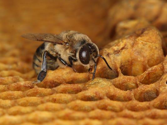Bee Contraceptive