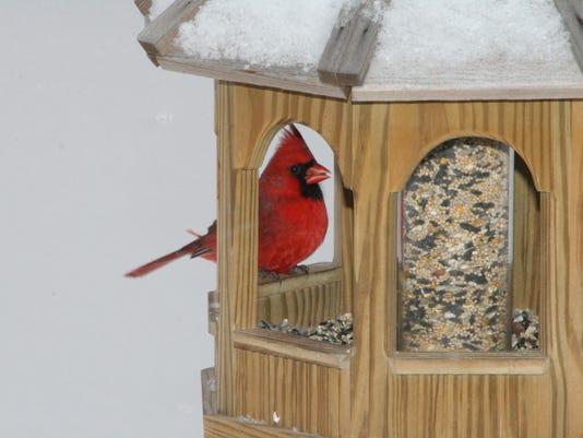 MNCO 0215 Dick Martin's column on birdwatching.jpg