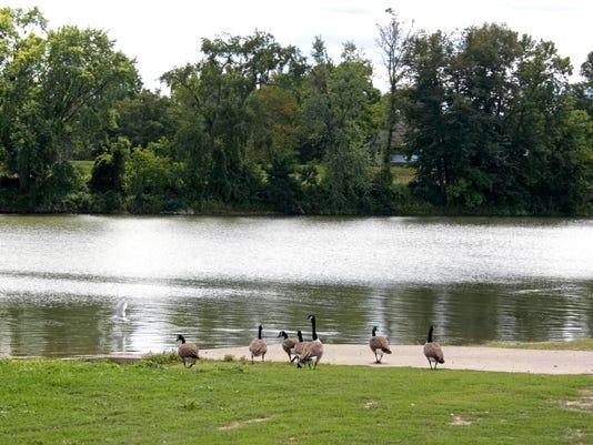 grove.st.geese1.jpg