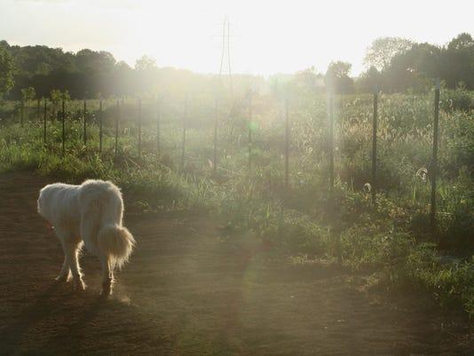 Raising Hope Farm 1.jpg