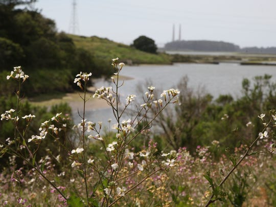 Wildflowers are in bloom this month at the Elkhorn Slough, splitting the boundary between Monterey and Santa Cruz counties.