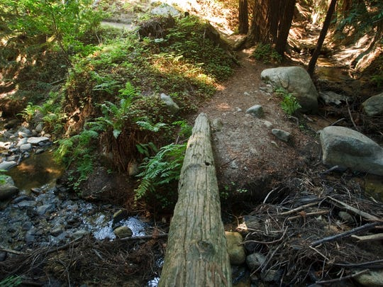 Soberanes Canyon Trail in Garrapata State Park in Big Sur. A fallen log over the stream.