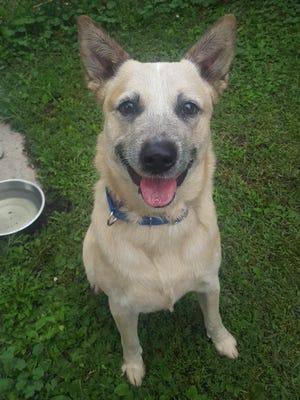 Oshkosh Northwestern Pet of the Week is Eamon.