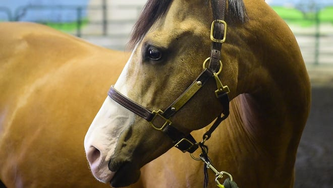 This horse and others at Bergen Equestrian Center are being used by Columbia University and the Man O' War Project to conduct the first university-led clinical research study to test the effectiveness of equine therapy to treat veterans with PTSD.