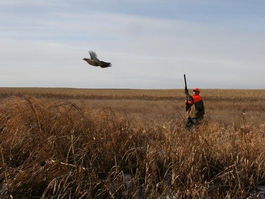 Pheasants1