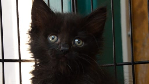 Leonard is available for adoption at the Animal Service Center of the Mesilla Valley