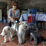 Michelle Vargas visits a New York cafe with Carmine, left, Lucy and Luigi. Vargas said she believes the estimated 500,000 dogs in the biggest U.S. city have a place in al fresco dining.