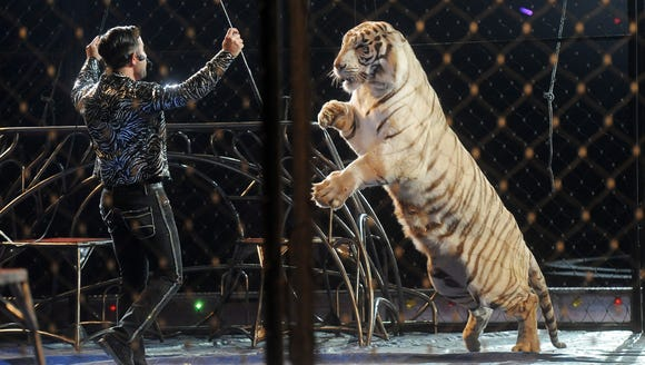 Apollo Fuentes performs with tigers during the El Riad