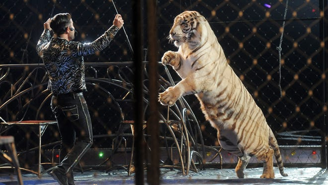 Apollo Fuentes performs with tigers during the El Riad Shrine Circus at the Sioux Falls Arena in 2015.