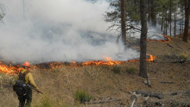 An 80-acre low-intensity prescribed fire was set along Jimtown Road Monday.