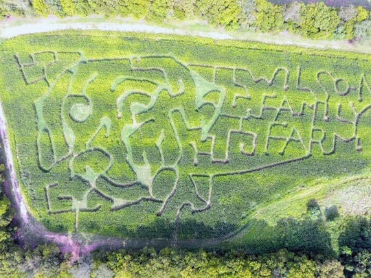 Wilson Family Farm's corn maze is in the shape of the