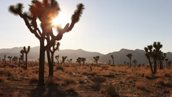 The sun sets at Joshua Tree National Park in July 2012.