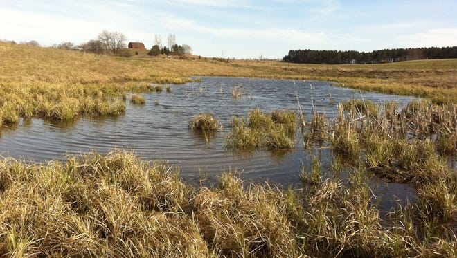 Wetlands such as this one on a farm in St. Croix County would lose protection under a bill being considered by the  Wisconsin Legislature.