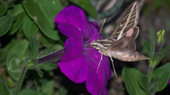 From: jane.shrum@cox.net[SMTP:JANE.SHRUM@COX.NET] 