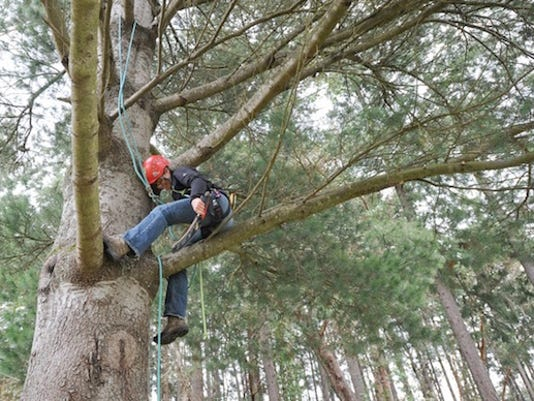 VIDEO: Bainbridge arborist climbs tall trees to save kitties