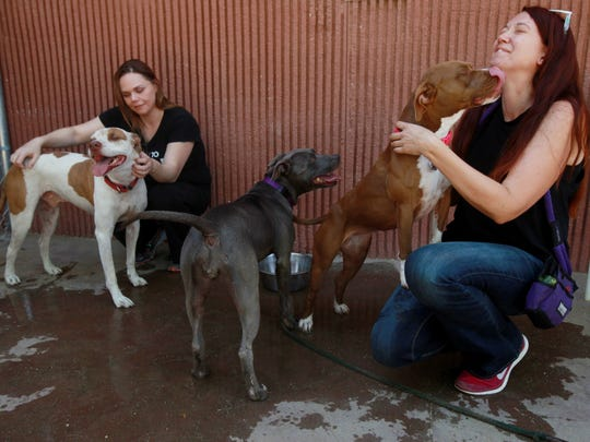Palm Springs Animal Shelter volunteers, from left,