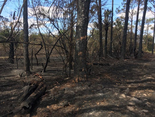Damage from a brush fire in Martin County Feb. 17,