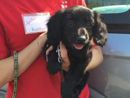 Dog Rescues In El Paso