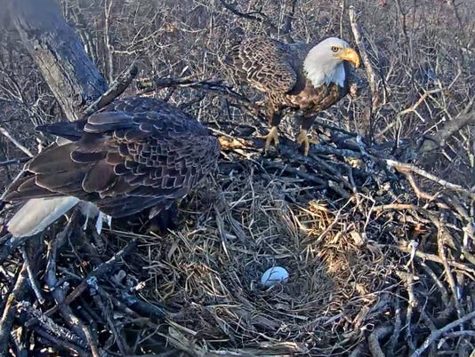 Hanover Eagle Cam shows first egg of the year