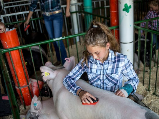 Leah Peters, 11, of Goodells, grooms her pig, Bubbles,