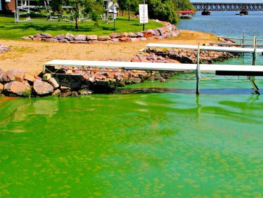 636229452338117133-algae-bloom.JPG