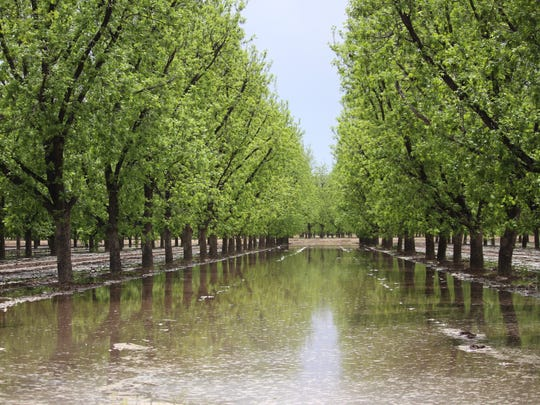 Orchards in southern New Mexico rely upon water from