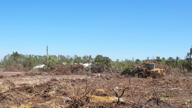 Neal Communities began clearing more than 38 acres along County Barn Road this month for Marquesa Isles of Naples, a gated community of twin villa homes in East Naples.