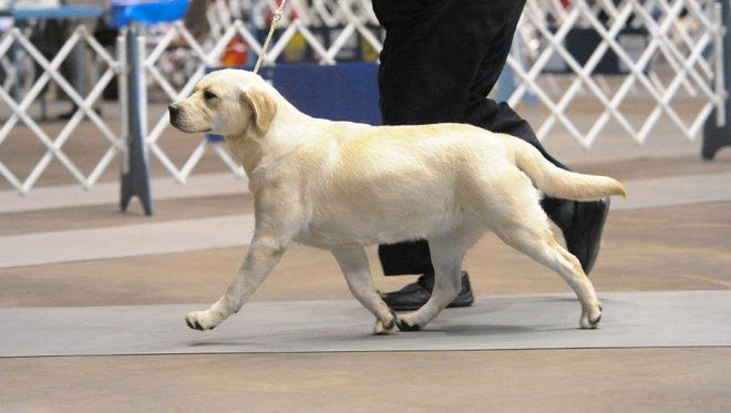The Cotton Cluster Dog Show returns to Monroe.