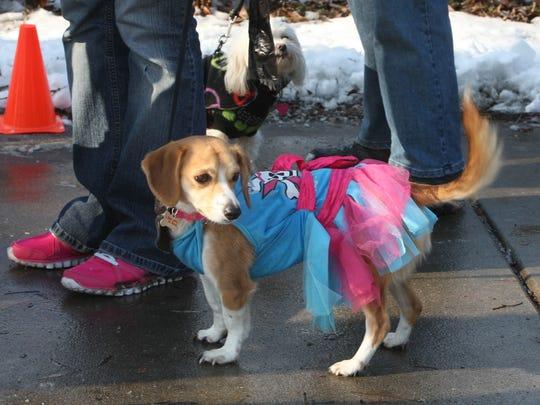 Monica Chopra and her Beagle Winnie wait to walk in