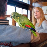 Parrot returned to Pensacola owner after improbable three-week journey away from home