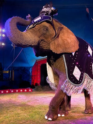 The Kelly Miller Circus, which is banned in some places due to its use of elephants, is returning to West Milford for two shows on June 25.