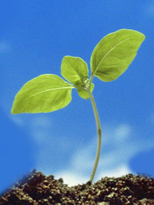 -seedling.jpg_20080118.jpg