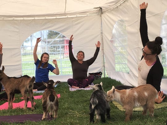 Instructor Erin Wagner, far right, leads a unique yoga class at Lucky Star Farm west of Iowa City inside a tent filled with baby goats.
