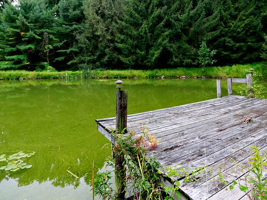 A pond owned by Kathy Pentz, 73, is shown in Dover
