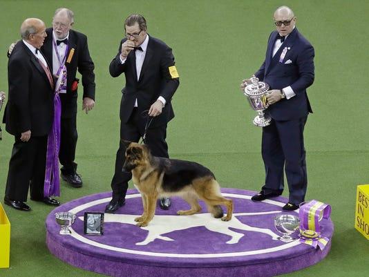 AP DOG SHOW S A USA NY