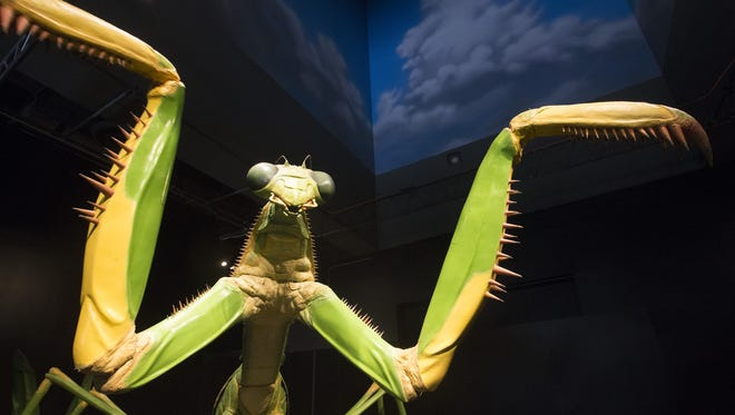 A giant animatronic Chinese praying mantis is on display at the World of Giant Insects exhibit at the Arizona Science Center in Phoenix on May 27, 2016.