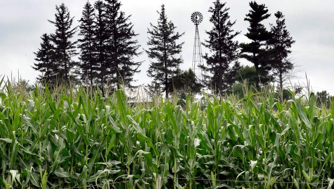 In this Aug. 5, 2014 photo corn plants are seen in a field near Ladora, Iowa. The nationís corn and soybean farmers are on track to produce record crops this year as a mild summer has provided optimum growing conditions. (AP Photo/Charlie Neibergall) ORG XMIT: IACN204